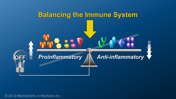 Balancing Immune System and IBD