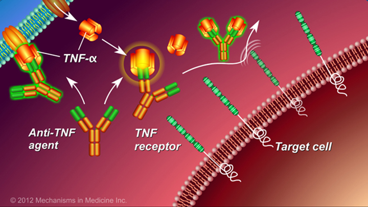How Anti-TNF Medications Work and IBD