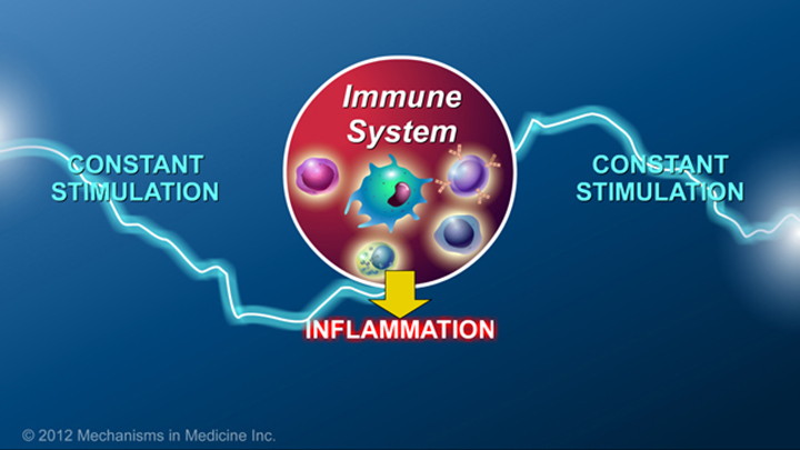 IBD Activated Immune System