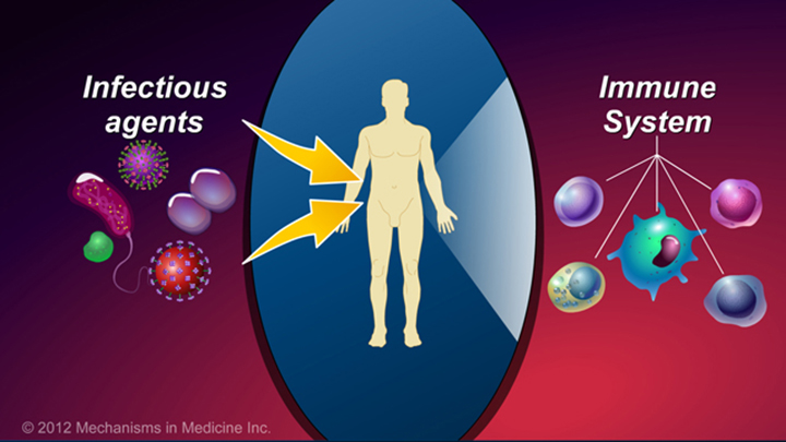 Immune System and IBD