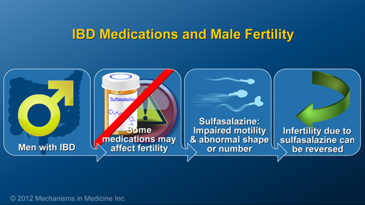 Male Fertility and IBD