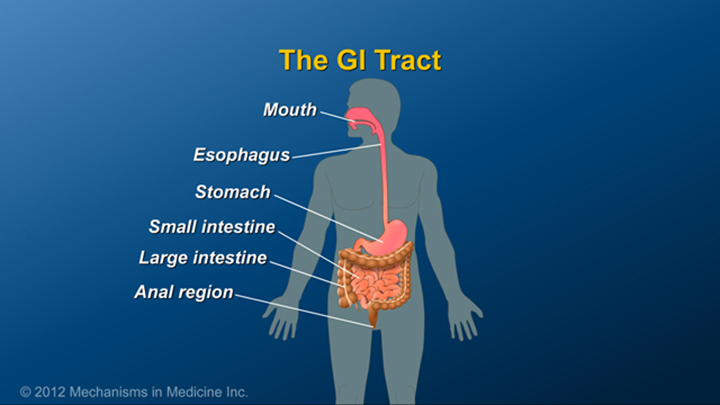 GI Tract and Crohn's